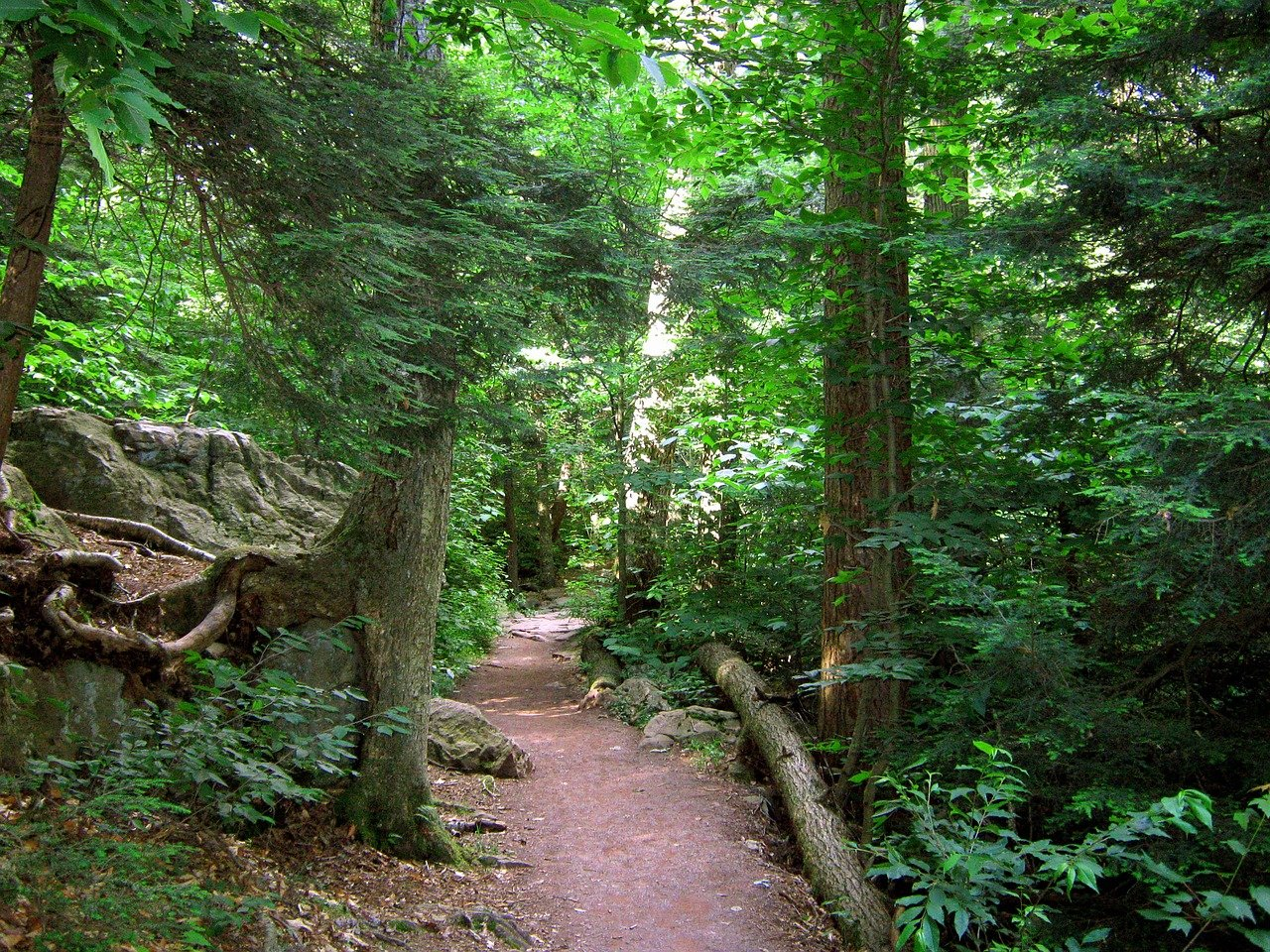 Watkins Glen State Park: The Complete Guide